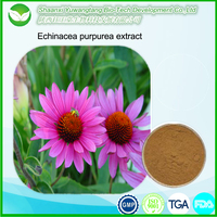 Natural Chinese herb Chicoric acid Echinacea extract/Echinacea herb extract