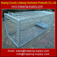 Strong Collapsible Live Animal Trap Cage Dog Fox Coyote Trap Cage