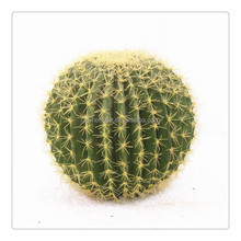 SJM091042 decoracion hoodia cactus artificial al por mayor 100% natural p.e./tuna <span class=keywords><strong>planta</strong></span> hecho en china