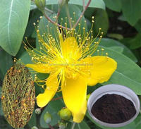 Spot sale natural Hot sale St.John's Wort Extract
