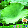 Hot Sale ! - lotus leaf p.e/ natural lotus leaf extract,Lotus Leaf Extract Weight Loss