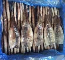 New Process Good Quality Frozen Skin on Todarodes Squid Tube in Squid