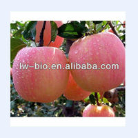 Supply High Quality Apple Extract Powder With Phlorizin