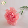 Reasonable Fresh Carnation Flowers Price From