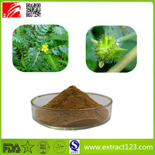 Factory sales Tribulus Terrestris Extract