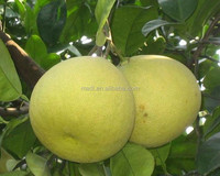 China High Quality Pomelo Fruit