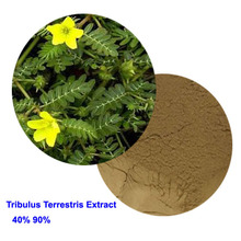 40% 90% Tribulus Terrestris Extract