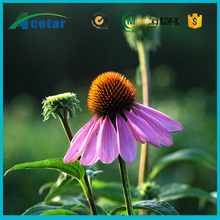 Chinese medicinal herb extract echinacea extract in cosmetics