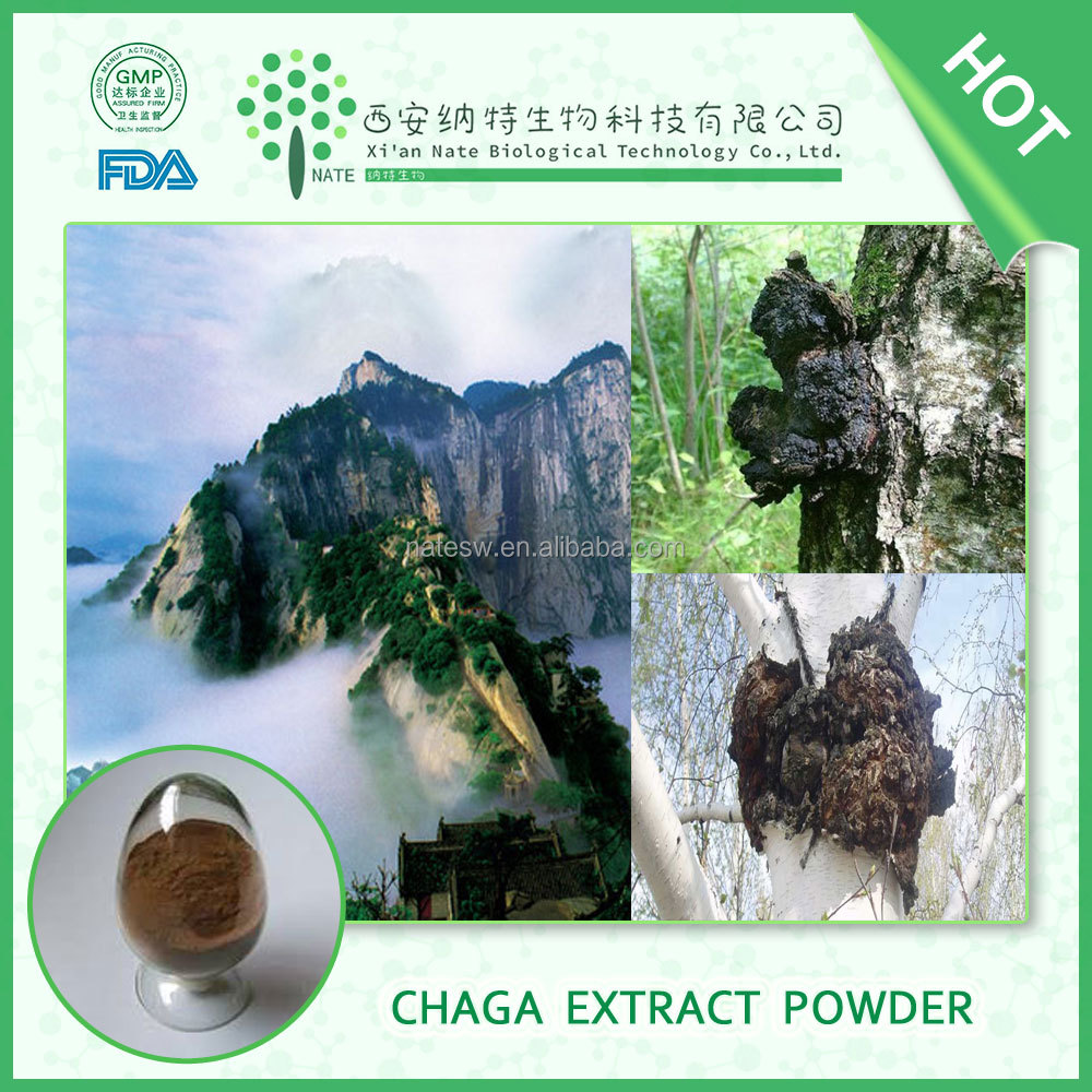 Additive free Raw natural Chaga Mushroom Inonotus obliquus Chaga extract powder By GMP