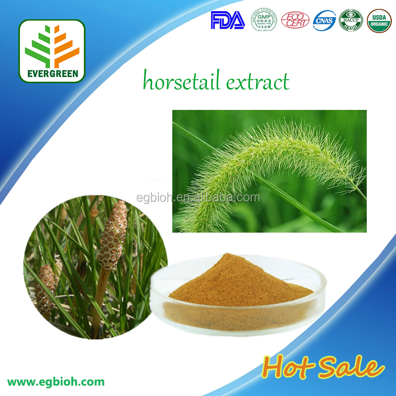 Organic horsetail extract/horsetail seed ectract/horsetail plant extract