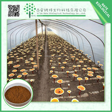 Reishi Mushroom bulk powder High Strength Extract Lingzhi Ganoderma Lucidum