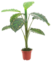 0147 (YY015) stocks wholesale artificial plant tree small fake plants