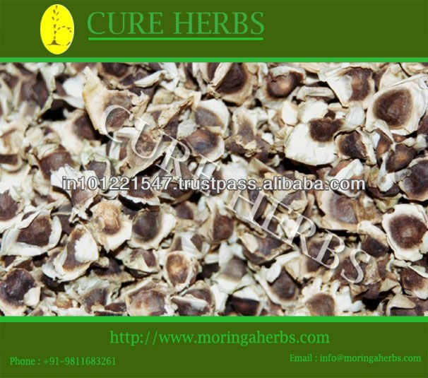 Producer of Natural Bulk India Moringa Seeds