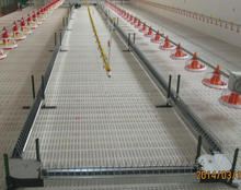 automatic poultry chain feeder equipment for breeder chicken