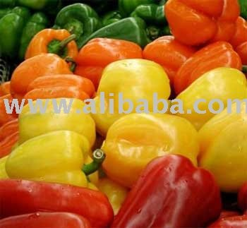 Fresh Pepper / Fresh Capsicum