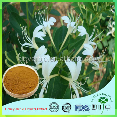 High Quality Natural HoneySuchle Flowers Extract