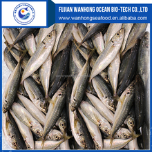 High Quality Frozen Pacific Mackerel fish for sale
