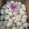 /product-detail/2019-china-chinese-best-fresh-natural-garlic-price-new-crop-62135479544.html
