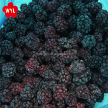 2017 Chinese New Season Frozen IQF Blackberry