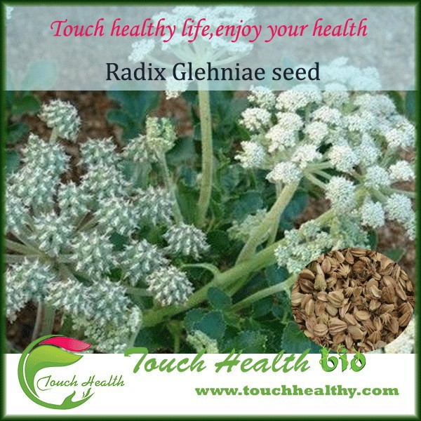 2017 Touchhealthy Supply Herb seeds radix glehniae seeds for planting