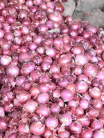 Fresh Red Onions 35-45mm 55-70mm