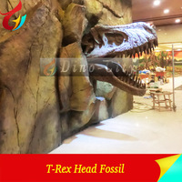 Museum Dinosaur Skeleton Fossils Pleo Fossils for Sale
