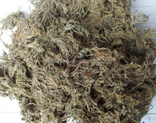 High Quality Capillary Wormwood Herb Extract