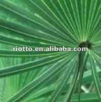 Top quality organic Saw palmetto extract