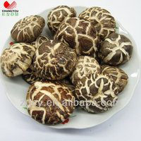 white flower whole sale mushroom prices