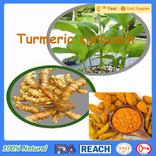 Curcumin Tablet/Turmeric Root Extract Powder 95% Curcumin