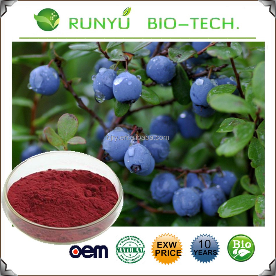 Natural fruit extract 25% anthocyanidins powder dry bilberry extract for Cataract Treatment