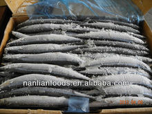 new coming frozen pacific saury