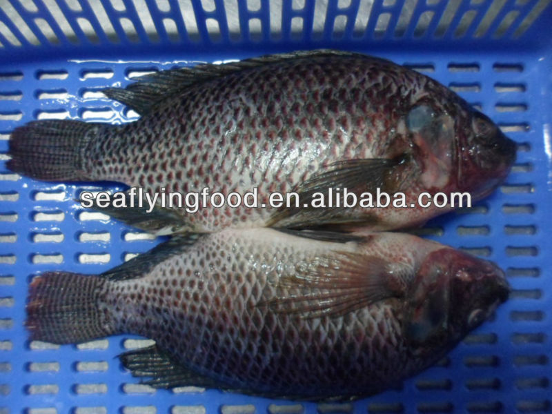 wholesale tilapia with best price, tilapia companies