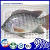 Fresh Frozen and Preserved Tilapia Fish & Seafood