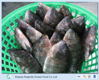 Frozen Tilapia Fillet Wholesale Price