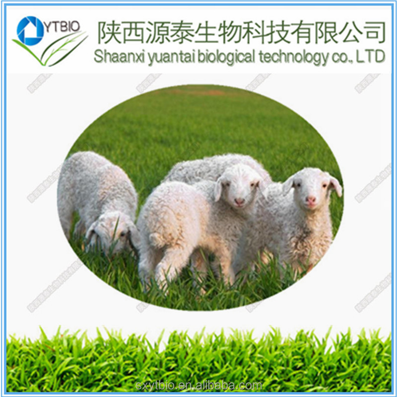 Hot Selling Sheep placenta extract powder in Stock