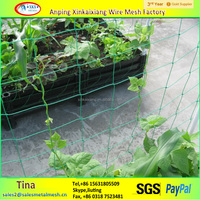 china supply extruded plastic pea and bean net/climbing plant support net/agricultural cucumber net