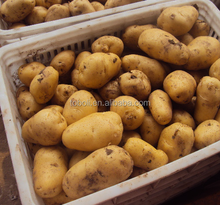 Potato Price Holland Potato Chip Sweet Potato Seed