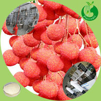 Top Quality Low Price Litchi Fruit Juice Powder Extract From Litchi Pulp