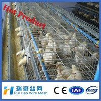 new product H type cages for broiler chicken
