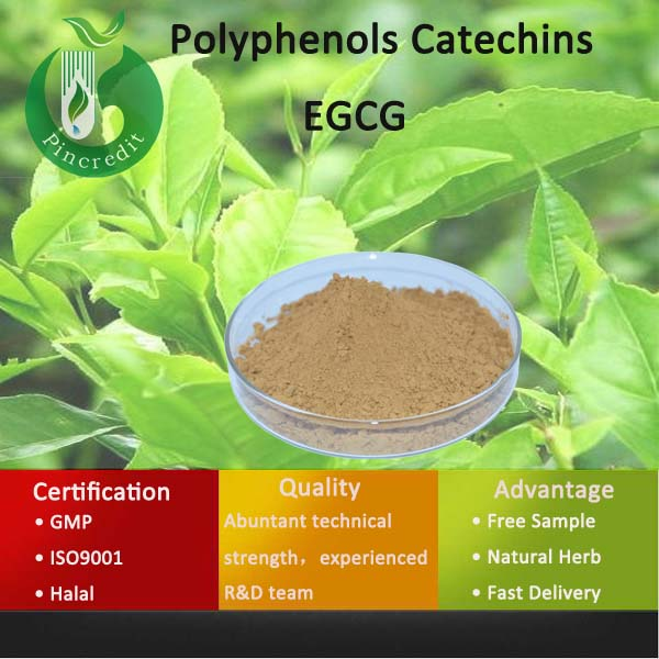 Natural Green Tea Extract Polyphenols Catechins EGCG