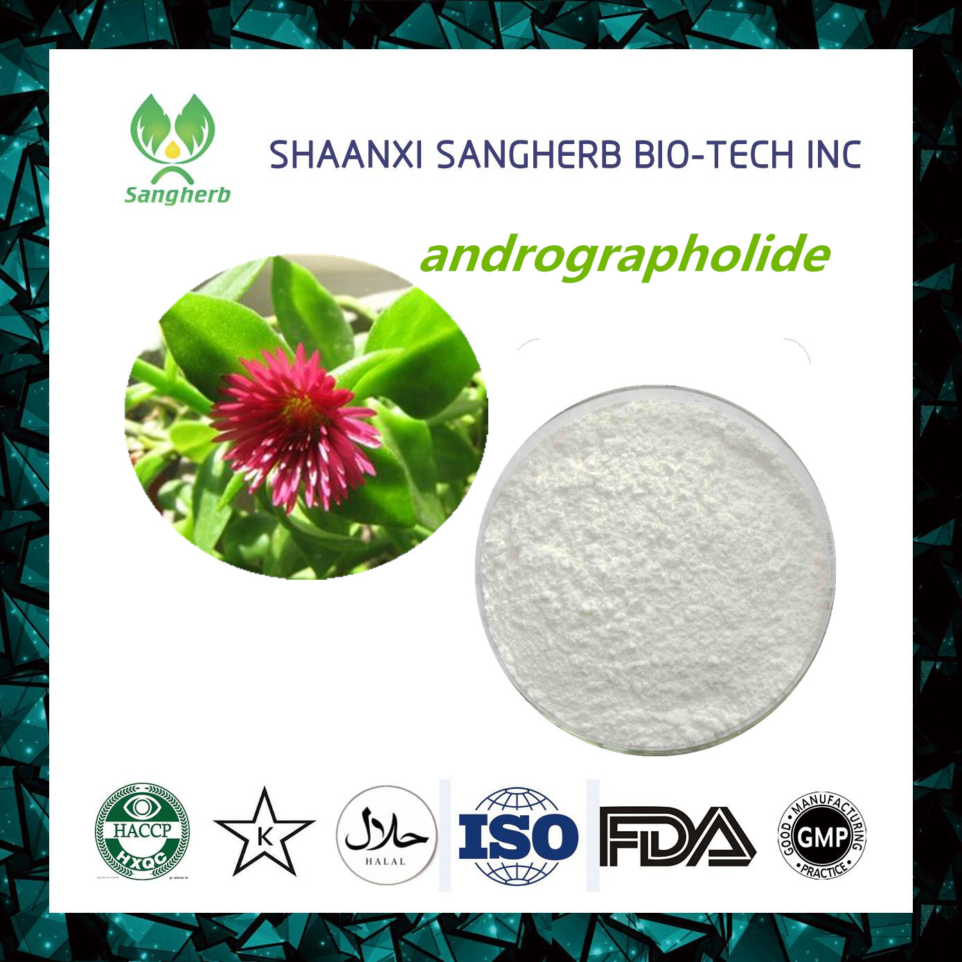 New product 2017 andrographolide paniculata extract With Promotional Price