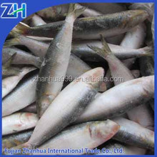 [ Sardine fish ] Frozen goods on sale for market for home cooking restaurant and Thailand Cuisine
