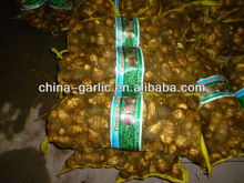 2016 Latest Natural Vegetation Big Fresh Taro For Sale