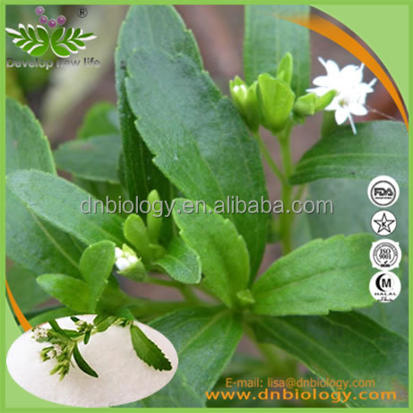 100% Natural Plant Herbal Stevia Rebaudiana Extract Total Steviol Glycosides ISO & Kosher