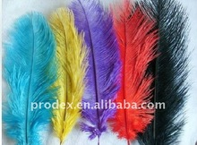 Ostrich feather, rooster feathers, feather extensions, grizzly rooster feathers