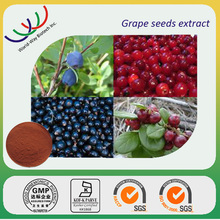Free samples grape seed extract powder, natural pure grape seed extract,grape seed extract proanthocyanidin