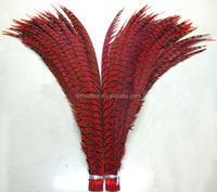 Factory Supply 90-100cm Lady Zebra Pheasant Feather Dyed Natural Pheasant Feather