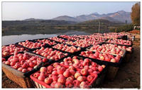 extract fresh fruit apple price