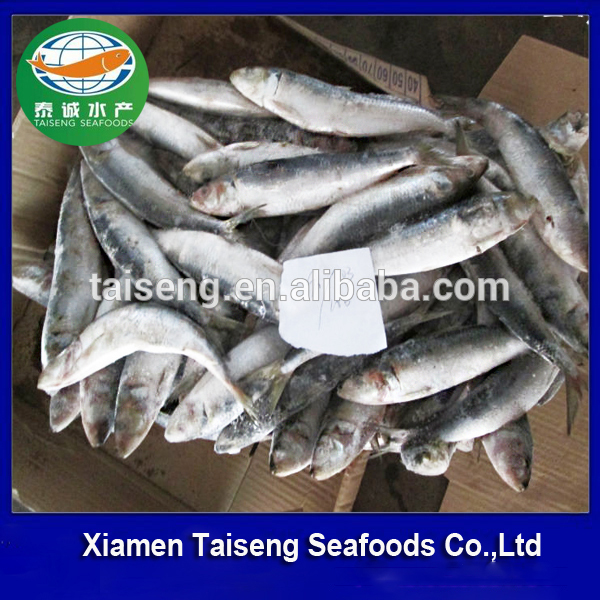 BULK FROZEN INDIAN OIL WHOLE SARDINE